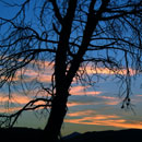 Tree-Blue-Sunrise-130-x-130-TREES-Page