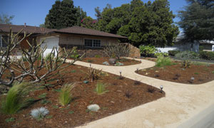 Drought-Tolerant-One-300x180