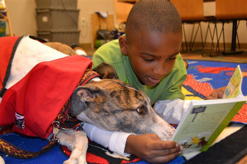 Boy reading to greyhound on floor